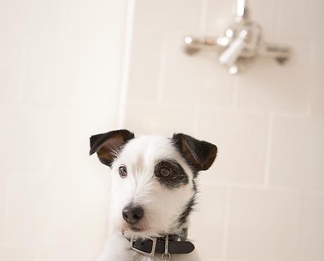 Self service dog wash seattle rub a dub dog wash self service baths solutioingenieria Images