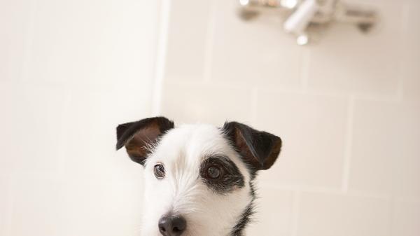 Saadi (Soothing Dog bath)