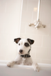 Jak oswoić psa z kąpielą w wannie