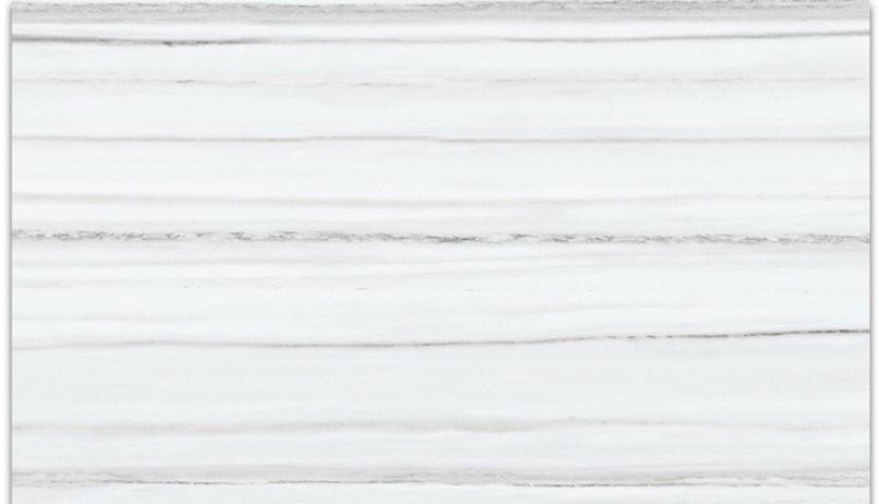 contour zebrino.jpg