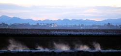irrigation morning