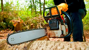 Steps to successful tree felling
