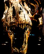 Tyrannosaurus-rex-dinosaur-Trix-skull-Gl