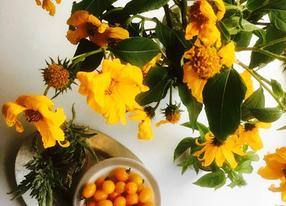 yellow tomato flowers