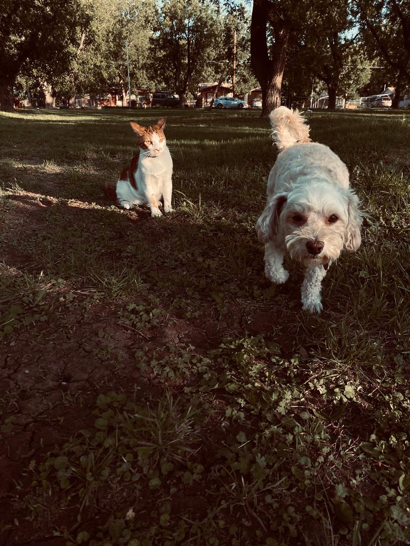sedrick and charlie