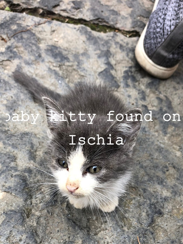 ischia kitty baby