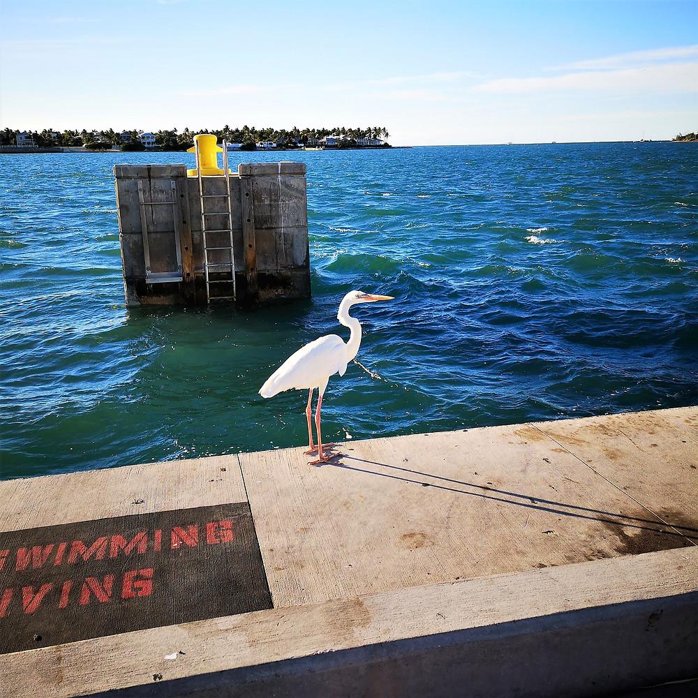 Voyage à Key West, Floride, Etats-Unis