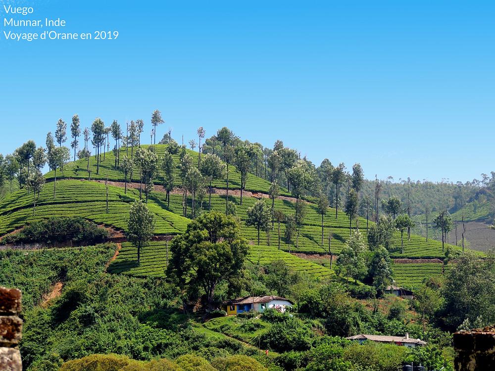Munnar, Kerala, Inde