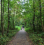 woods picture.JPG