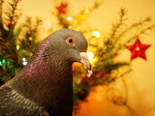 Les plumes de Noël