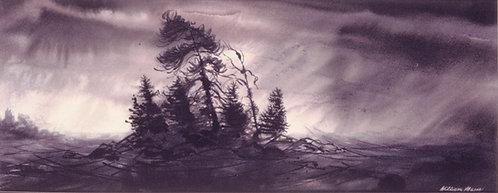 3001 Pine Island Storm