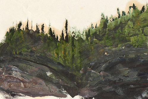 0092 Untitled Black Spruce II - unsigned study