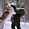 Bill Mason and wolf