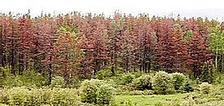 Are trees effective Co2 scrubbers