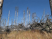 New Research shows trees may no longer be effective Carbon Scrubbers