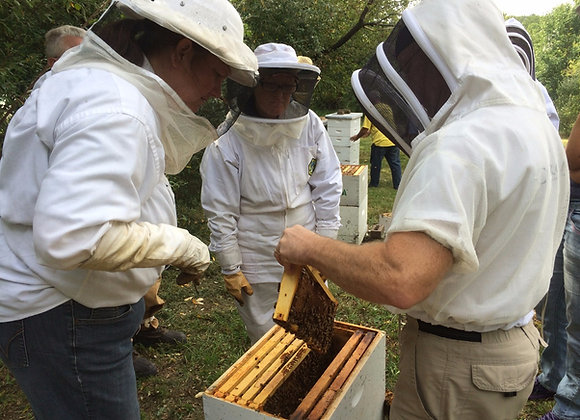 Intro to Beekeeping Online Registration - 1 household
