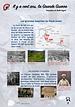 7- Les grandes batailles du Front Ouest.