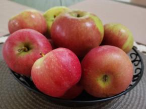 Apple Picking Season is Finally Here!