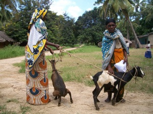 Nachhaltiges Ziegenfinanzierungsprojekt für alte Menschen in Kineng'ene, Tansania.