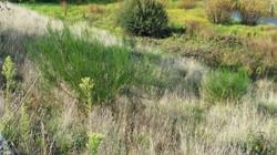 Bombala R Weeds IV