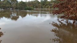 Flooded Plantings