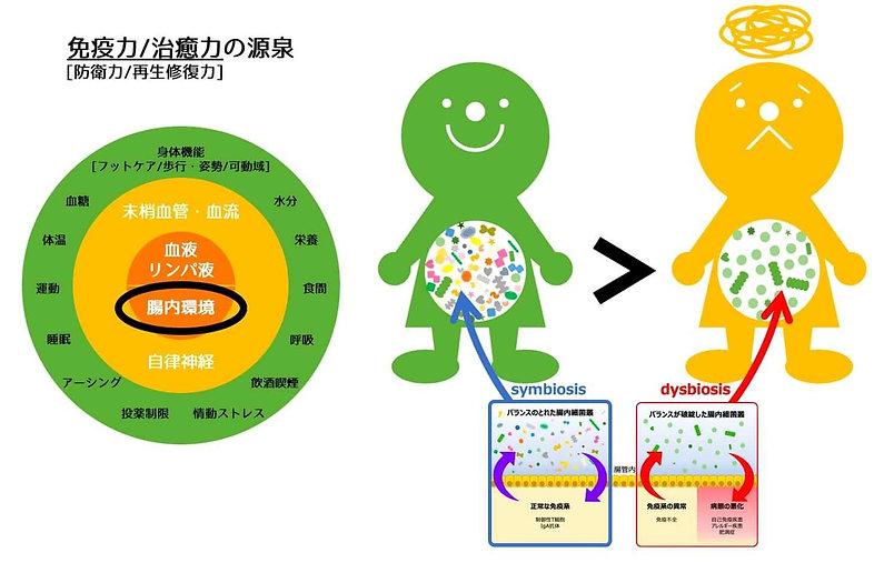 腸育腸活スクールスマートフード免疫力と治癒力の核