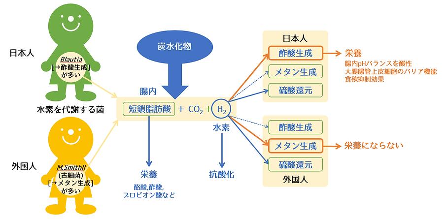 腸育腸活スクールスマートフード日本人と外国人