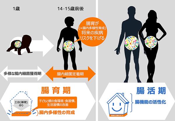 腸育と腸活