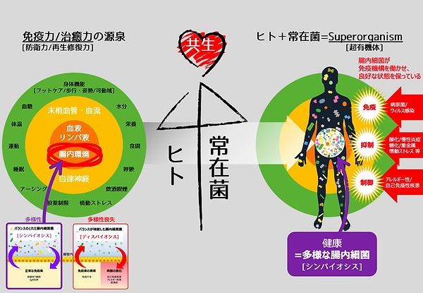 腸内フローラの重要性