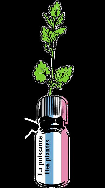 植物のチカラ3.png