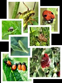 Purely Green Bio-Pesticide Super Concentrate