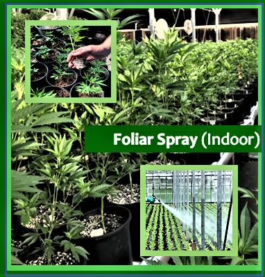Foliar Spray (Indoor)