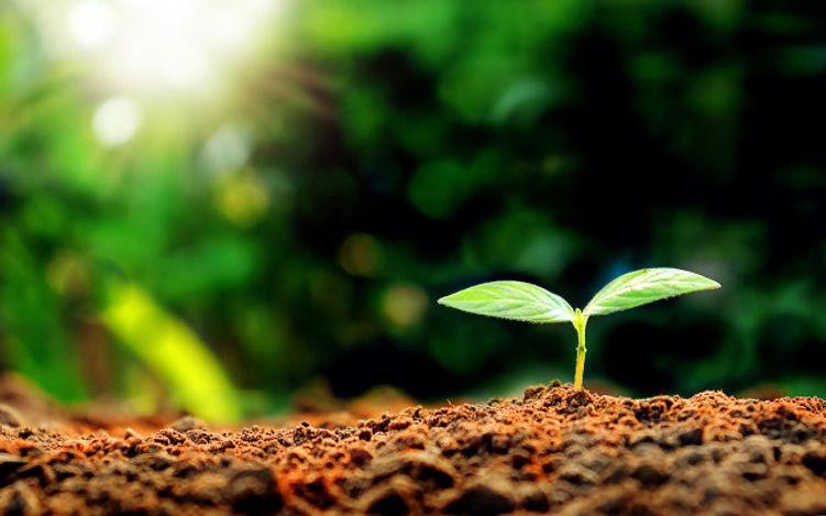 seedlings-morning-green-background_104677-6.jpg