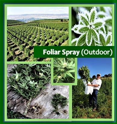Foliar Spray (Outdoor)