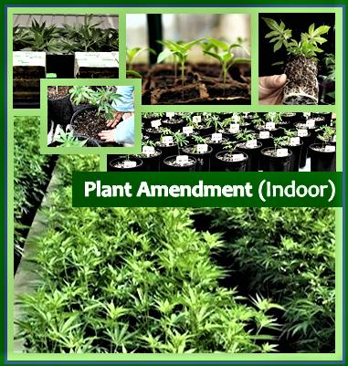 Plant Amendment (Indoor)
