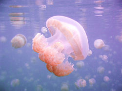 jelly same color .jpg