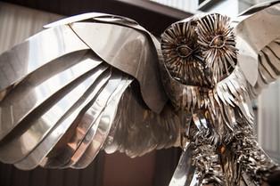 Barn Owl Detail.jpg