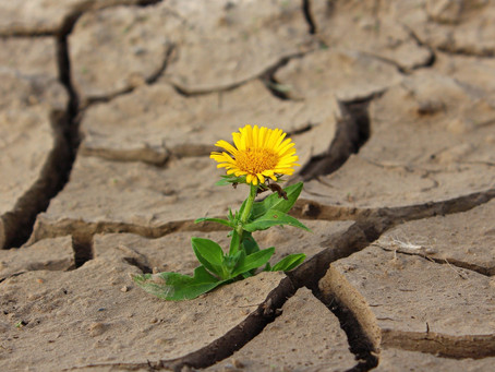 The attribute of persistence