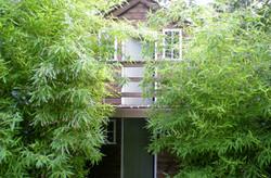 Garden Maintenance Chelsea
