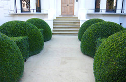 Garden maintenance chiswick