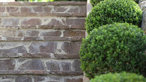 Give Your Buxus Some TLC...