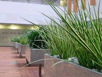 Corporate Interior Planting