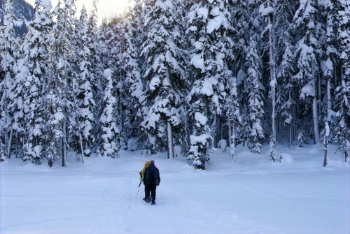 Slow Down Tours snowshoeing