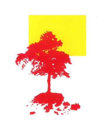 Tree Sillhouete - Coral.jpg
