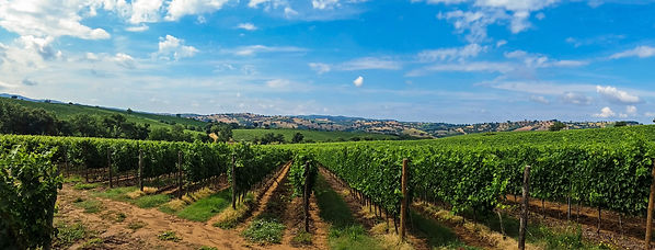 landscape-sky-vineyard-wine-field-panora