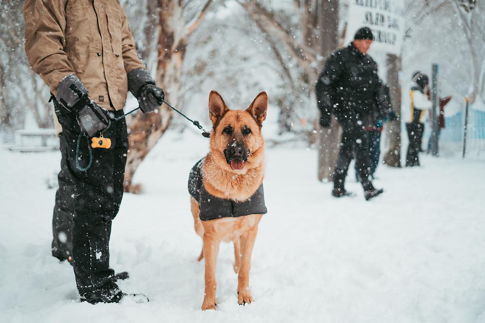 Police Dog Tracking