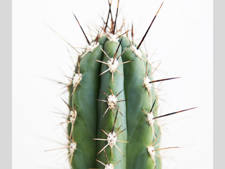 Does Your Chin Hair Feel Like a Pokey Cactus?