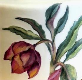 Botanical illustration detail