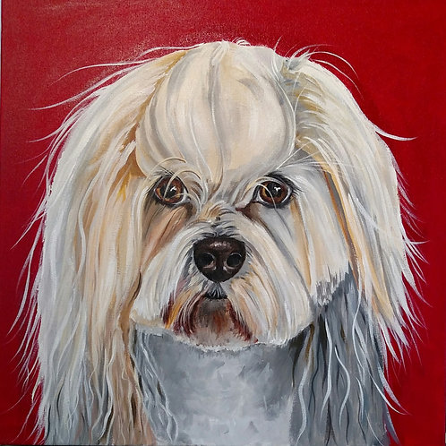 White Cockapoo on Red