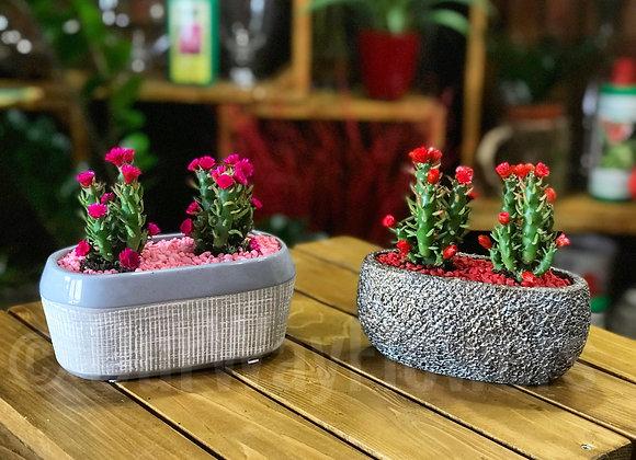 Cactus Duo